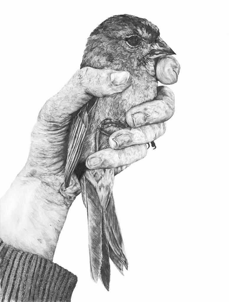 Embrace by Janie Stapleton